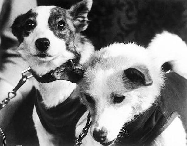 Two other dogs - Mushka and Albina were also trained for the Sputnik 2 launch