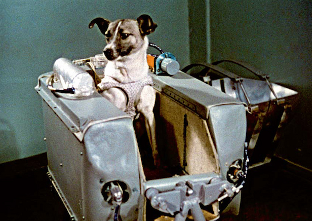 Heroes Of Space Laika The Space Dog